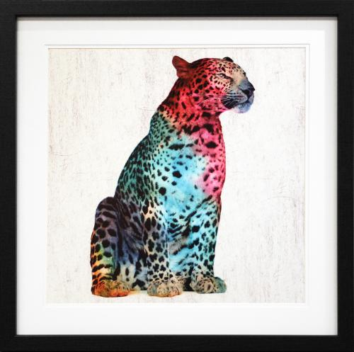 Multi coloured leopard